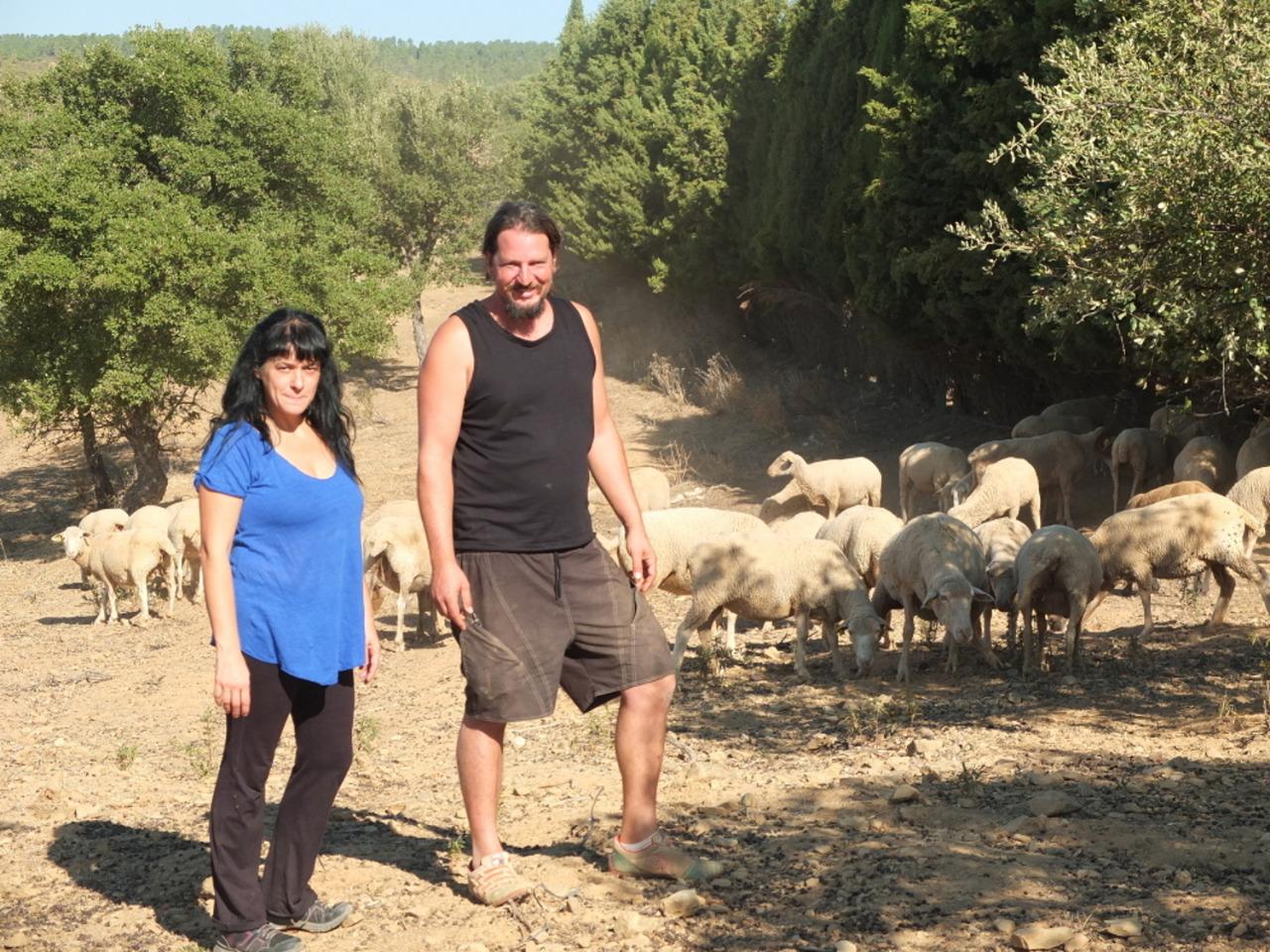 Eva y Gonzalo ante su rebaño de merinas